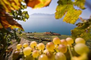 Швейцарските вина